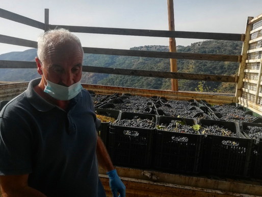 The Art of Wine in Calabria