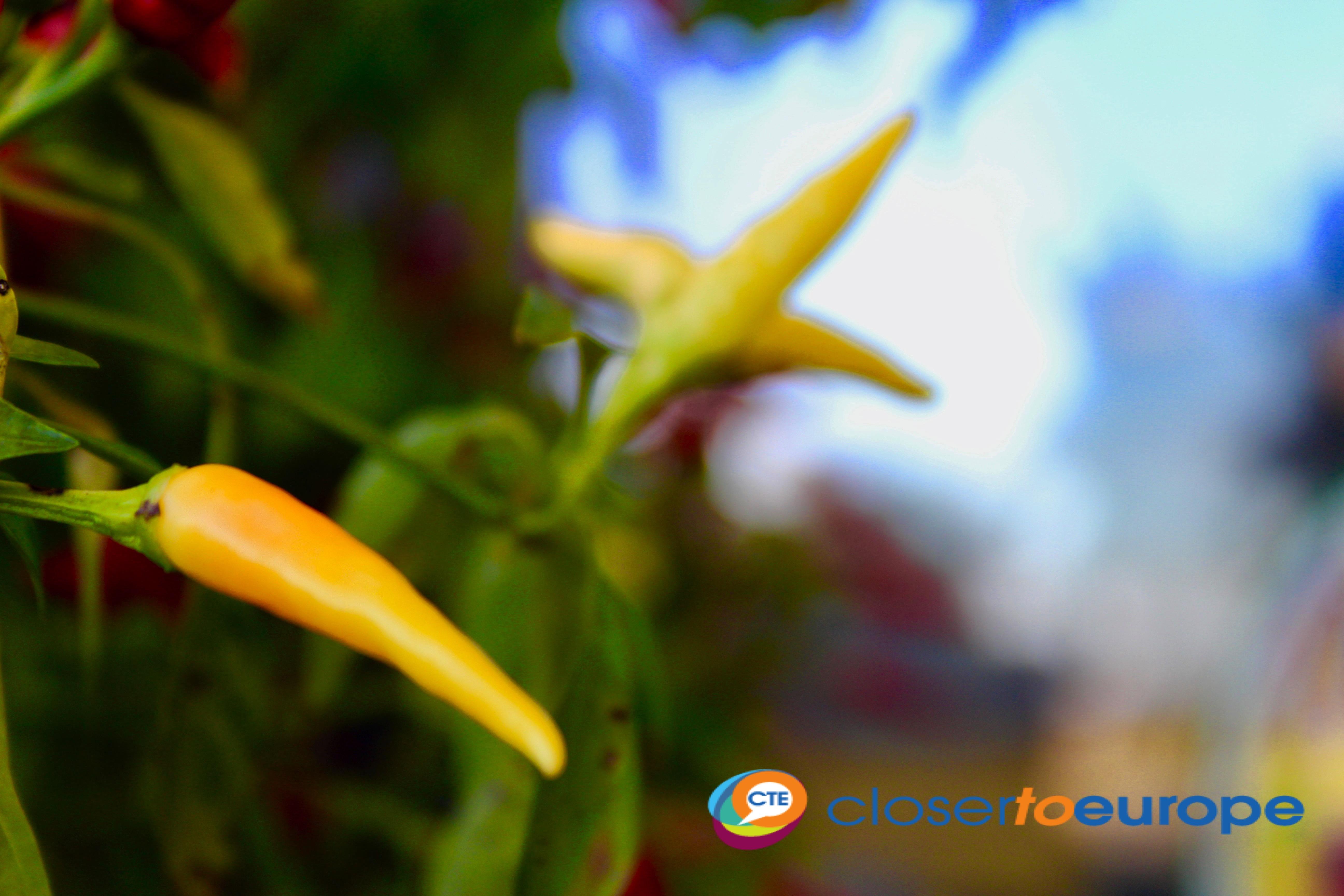 Chilly_garden2