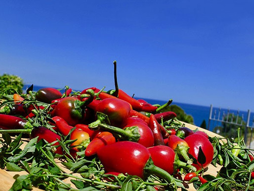 Mediterranean diet – The Calabrian chili pepper and the red onion