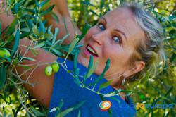 Picking up olives1