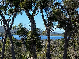 1328m2 block with beautiful views of the Walpole Inlet!