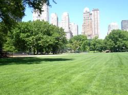 Stunning Park