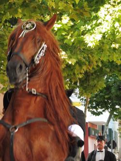 Mahon Horse