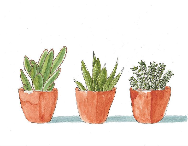 succulents-2337197_1920.jpg