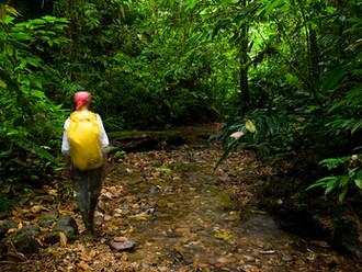 """an excellent jungle trip"""