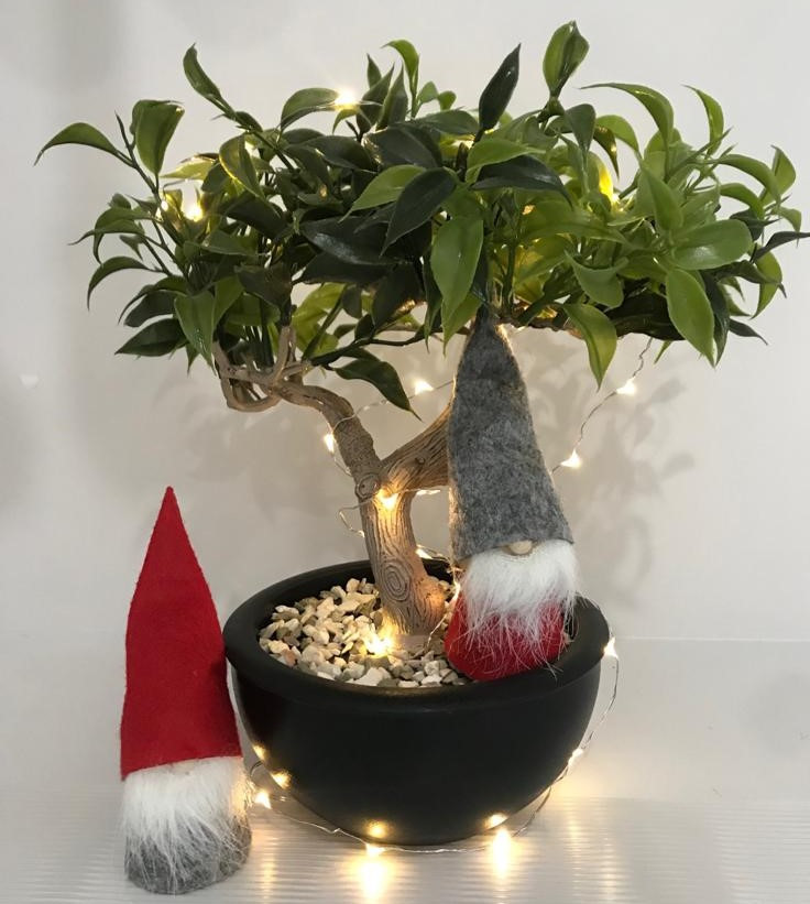 christmas gnomes in a Bonsai