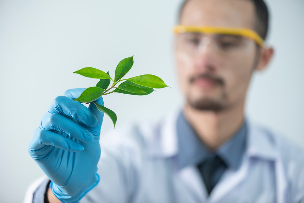 A man in a lab holding a plant