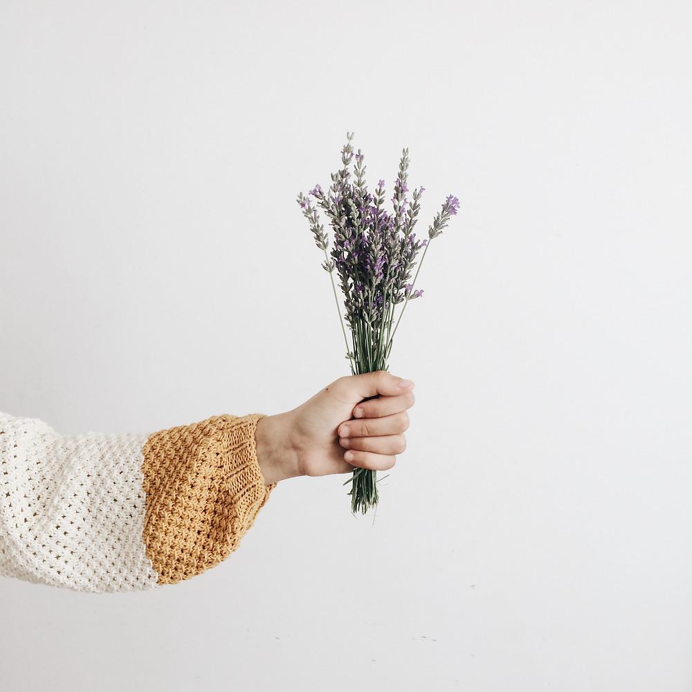 Lavender plant being held