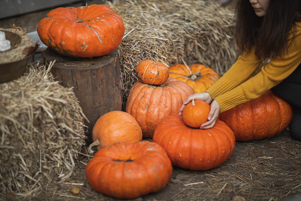 Woman picking pumpkins at a pumpkin patch