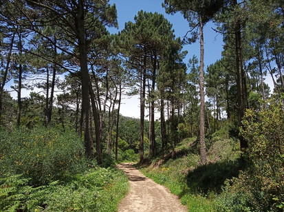 Bosques da Malveira da Serra