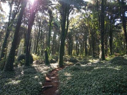 Bosque da Peninha (Sintra)