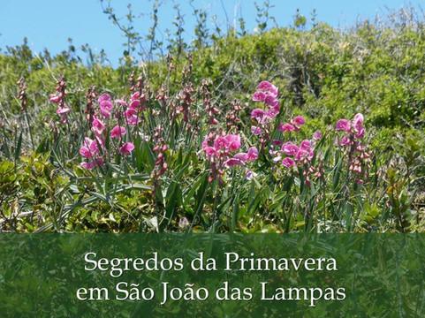 Segredos da Primavera em São João das Lampas