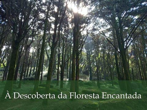 À Descoberta da Floresta Encantada