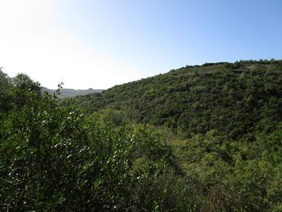 Vale de Cheleiros