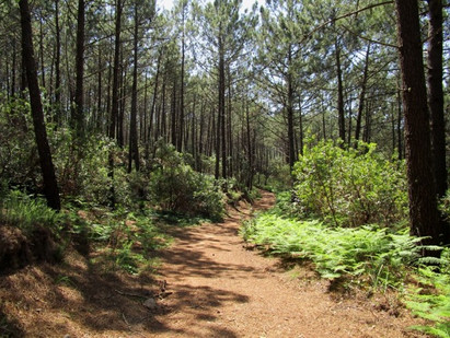 Floresta da Tapada de Monserrate