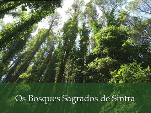 Os Bosques Sagrados de Sintra