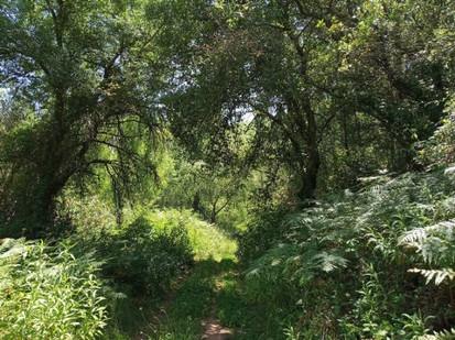 Bosque no vale de Igreja Nova