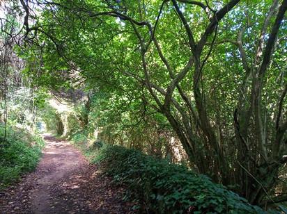 Bosque da Aldeia do Penedo (Colares)
