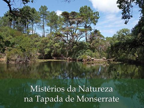 Mistérios da Natureza na Tapada de Monserrate