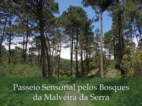 Passeio Sensorial pelos Bosques da Malveira da Serra
