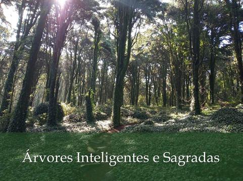 Árvores Inteligentes e Sagradas