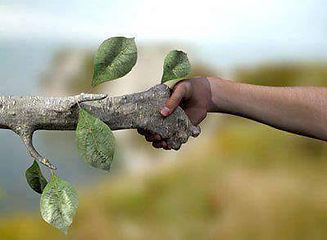 Plant hand shaking.jpg