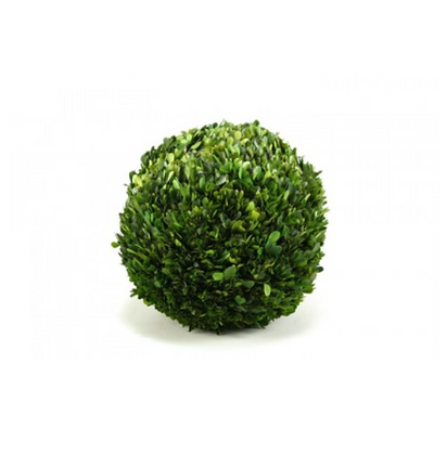 "8"" Preserved Boxwood Ball"