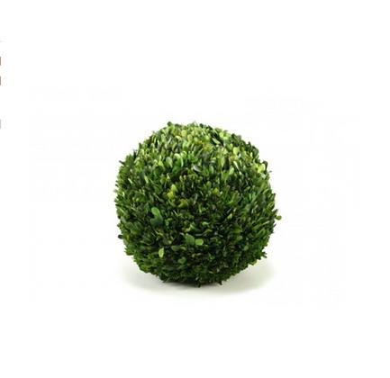 "6"" Preserved Boxwood Ball"
