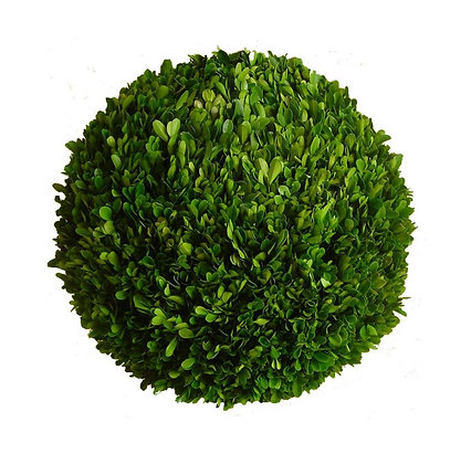 "19.75"" PRESERVED BOXWOOD BALL"