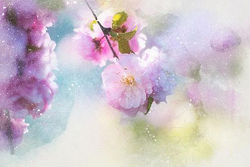 flowers-2733773_1920.jpg