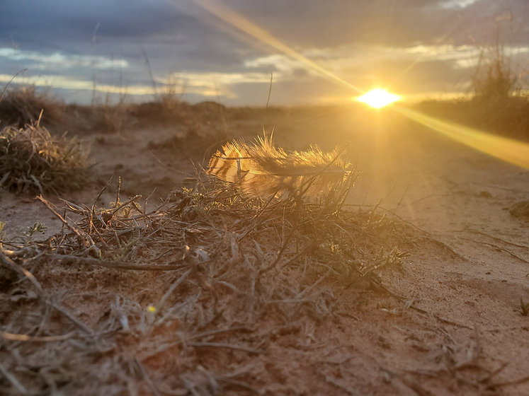 feather sunset.jpg