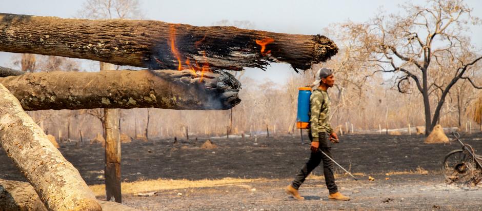Ecosistemas después del fuego: heridas difíciles - pero no imposibles - de sanar