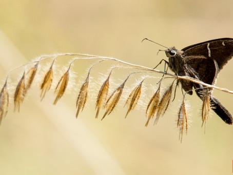 De mariposas...