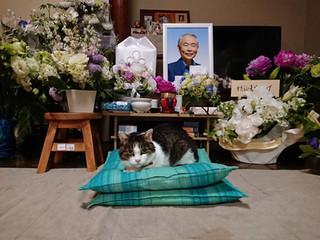 En hommage à MINORU HOSHINO