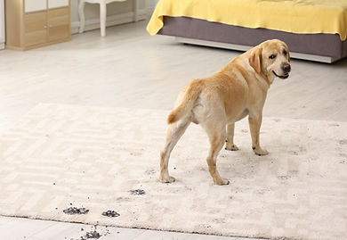 Pet-Stain-Removers.jpg