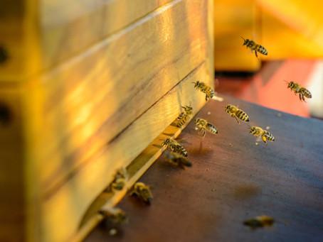 Warum Bienen?