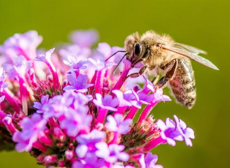 Wissenswertes über Bienen