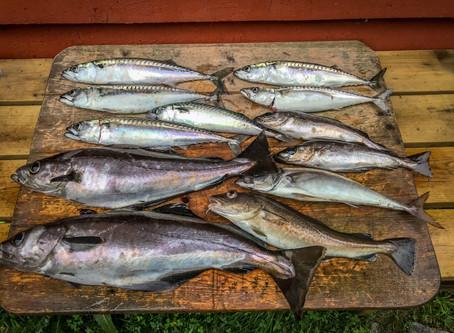 Geräucherte Fisch-Frikadellen und Roter Salat