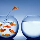 fish%20bowl_edited.jpg
