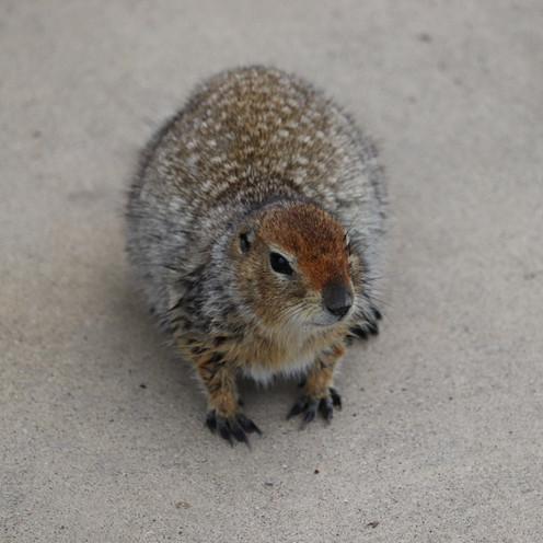 Wildlife Denali National Park