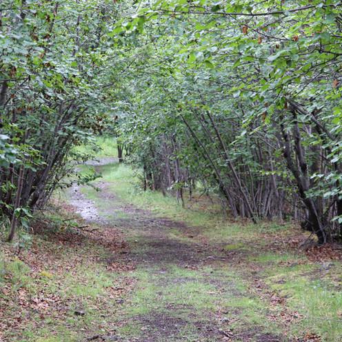 Start of Rambler Mine Trail