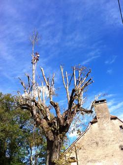 Blue sky pruning long shot