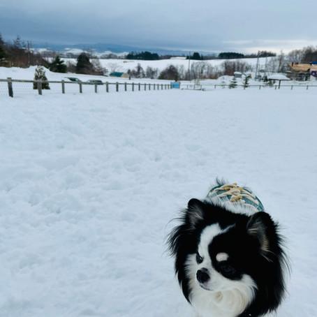 愛犬家におすすめ栗山町のドッグラン【読者様ブログ】