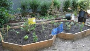 Improvements at Daly Avenue Garden