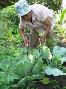 Harvest Time at Roberto Clemente Garden