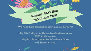 PLEASE HELP ANTHONY GARDEN & SUN WIND & SHADE OASIS PLANTS SEEDLINGS MAY 7TH & 8TH