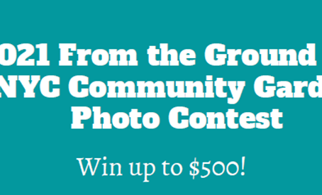 A GREAT OPPORTUNITY TO WIN SOME CASH & SHOW OFF YOUR GARDEN