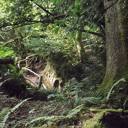puzzlewood_01.png