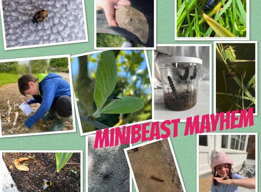 Junior Infant Minibeast Mayhem