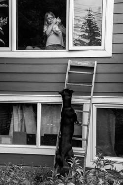 Dog denied